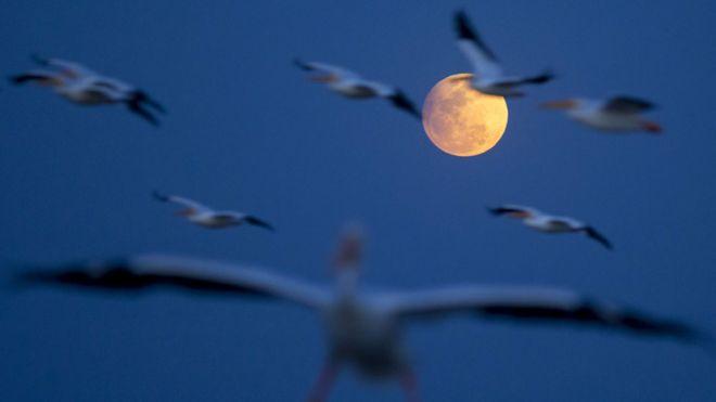 Luna llena vista desde la Isla de Petatán en el estado de Michoacán, en Mexico