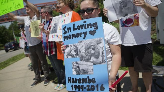 Protesters mourn Harambe