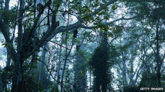 congo rainforest africa images