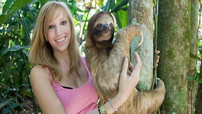 Sloth Hanging Upside Down Hanging Upside Down