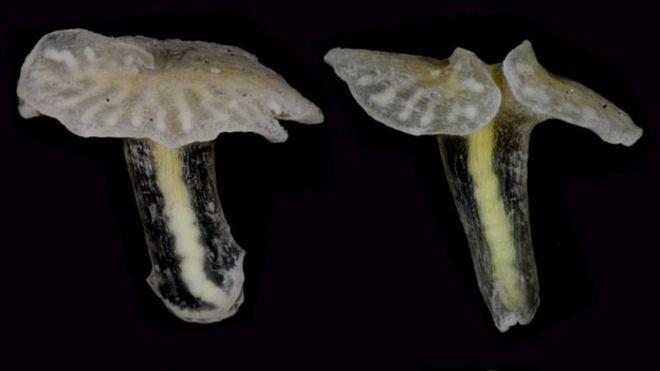Deep Sea Mushroom