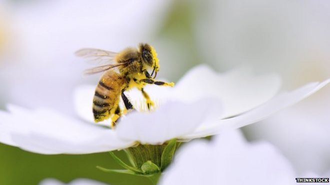 Wild Honey Bees Can no Longer