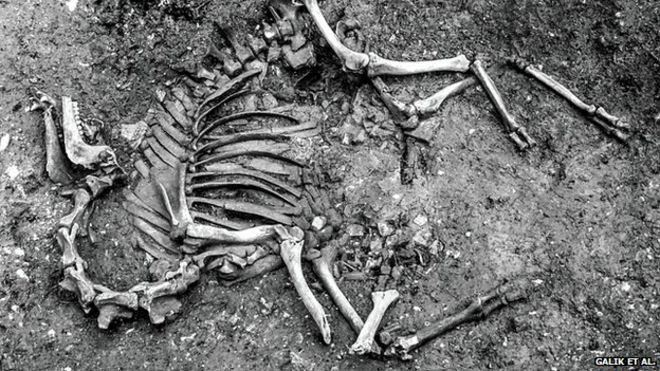 Một hóa thạch được tìm thấy ở Áo