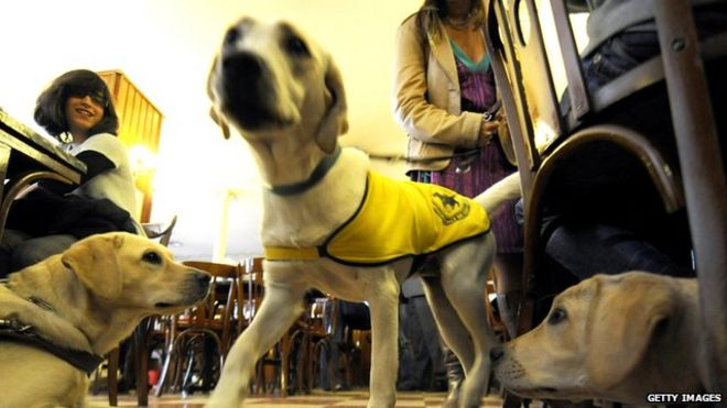 Three guide dogs wearing high visibility jackets