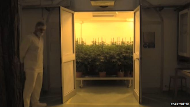The room housing the army's cannabis farm