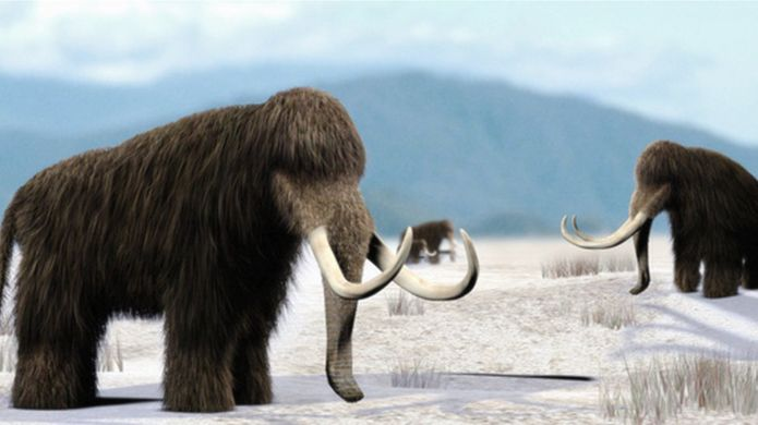 http://ichef.bbci.co.uk/news/695/cpsprodpb/5939/production/_94914822_e4470055-mammoth-spl.jpg