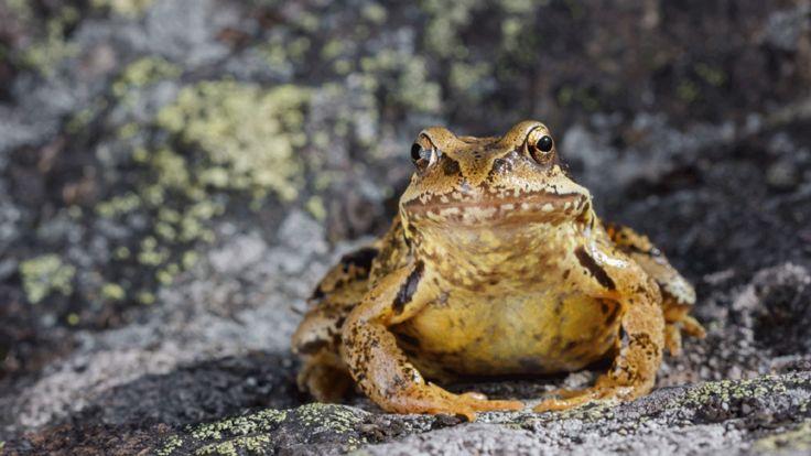 http://ichef.bbci.co.uk/news/736/cpsprodpb/A03B/production/_86791014_frogthinkstock.jpg