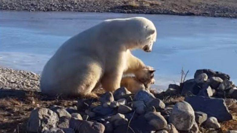Polar bear petting a Husky