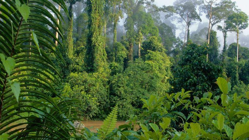 http://ichef.bbci.co.uk/news/800/cpsprodpb/10678/production/_92329176_c0157414-lowland_rainforest_danum_valley_sabah-spl.jpg