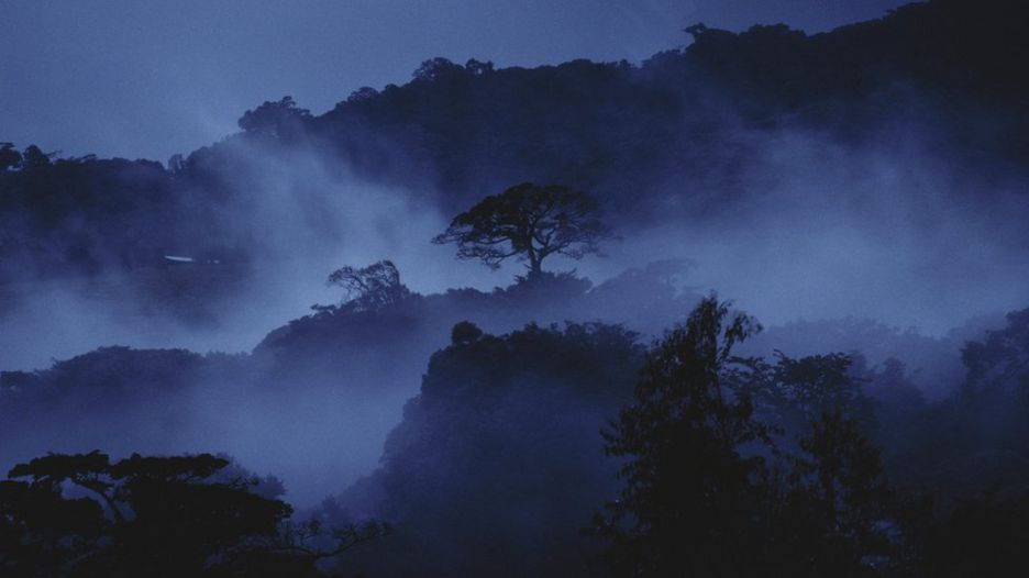 http://ichef.bbci.co.uk/news/936/cpsprodpb/BC40/production/_92329184_c0173110-misty_cloud_forest_at_dusk-spl.jpg