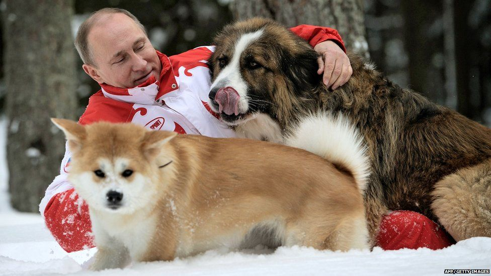 Image caption Vladimir Putin owns a Japanese akita (bottom) which is a  banned breed in Ireland