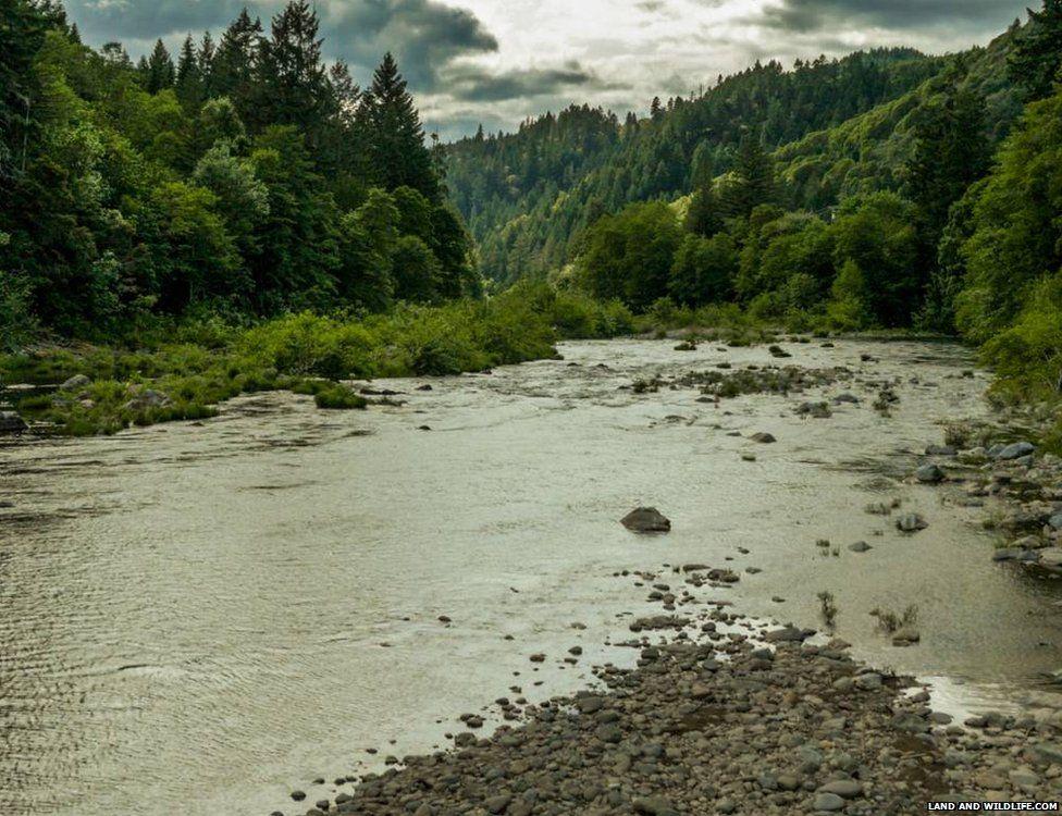 Tiller, Oregon