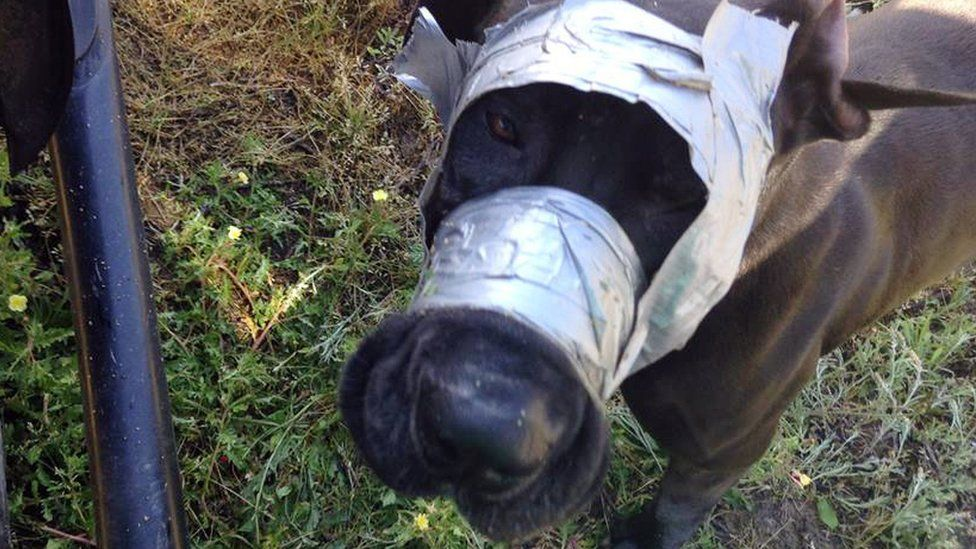 Dog found with tape round its muzzle