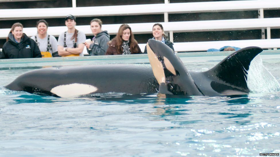 Kasatka the Orca whale and her calf