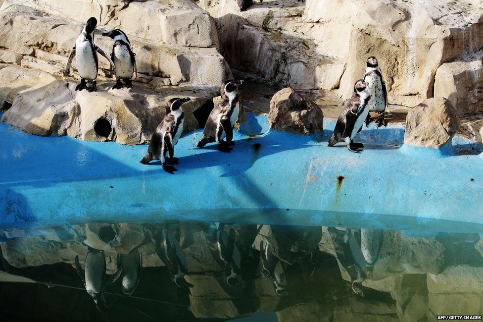 Penguins at Marineland