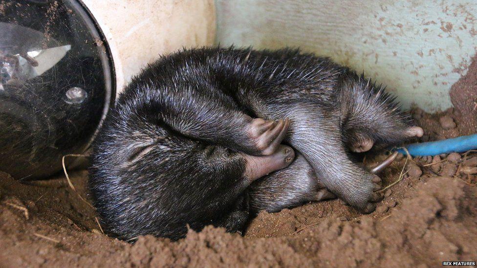 puggle sleeps