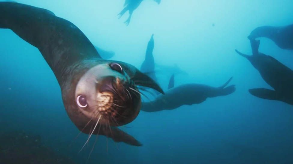 The producer of Blue Planet 2 says the stories seen in the new series of  the show are so gripping, it's like watching a
