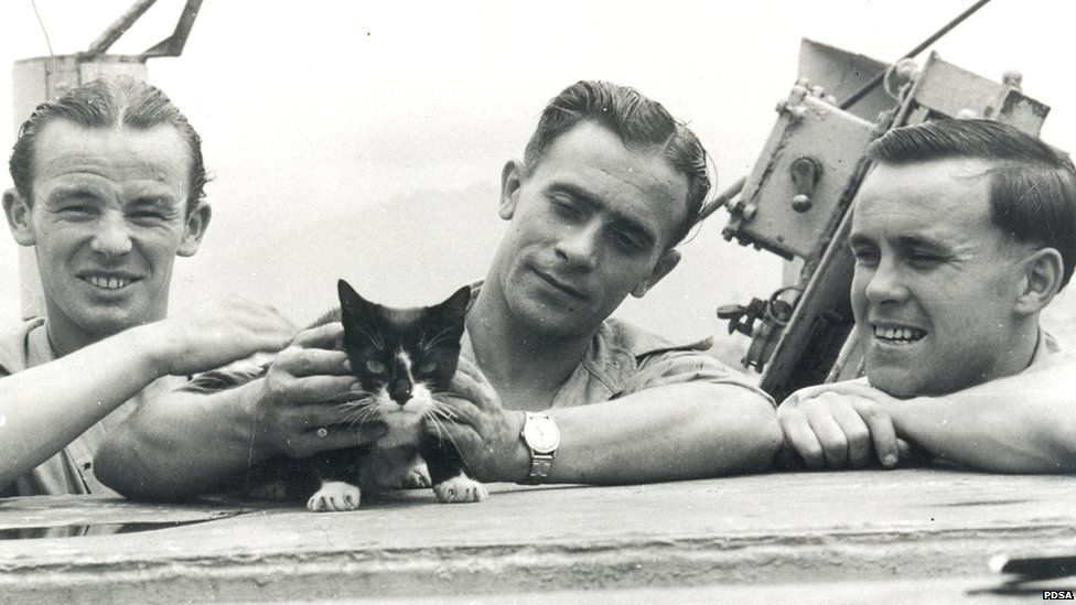 Simon the cat awarded a Dickin Medal in 1949