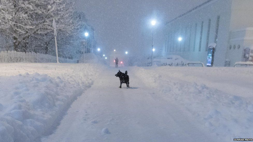 This is a photo of a Dog out in the streets during the snowfall.