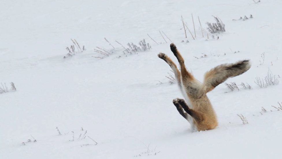 having a bad day the funniest animal photos of the year will cheer