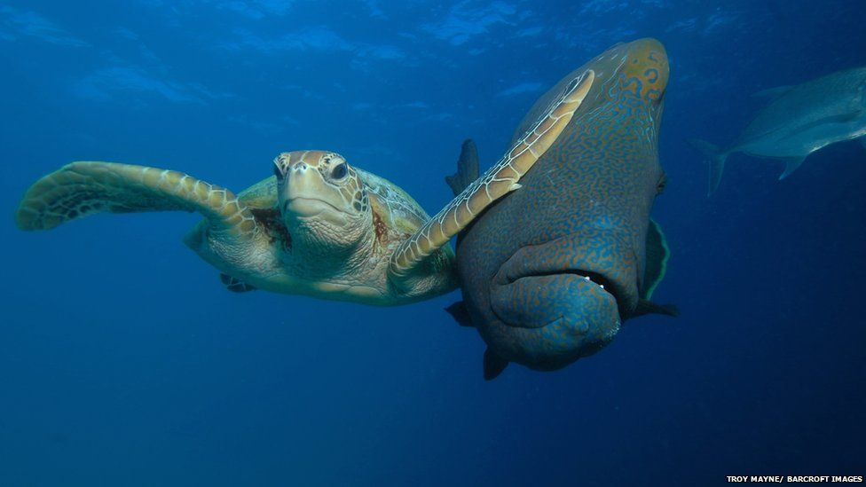 Turtle and fish