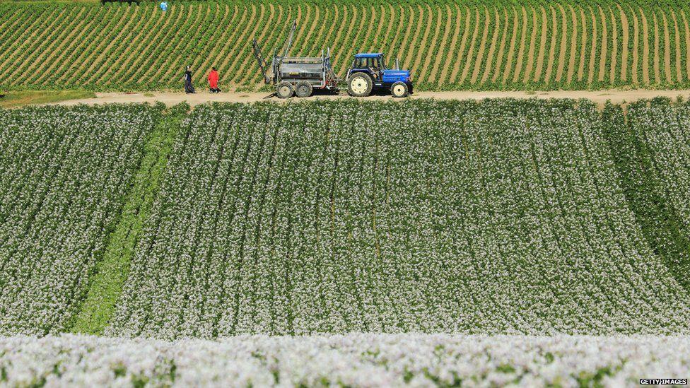 A potato field in Hokkaido