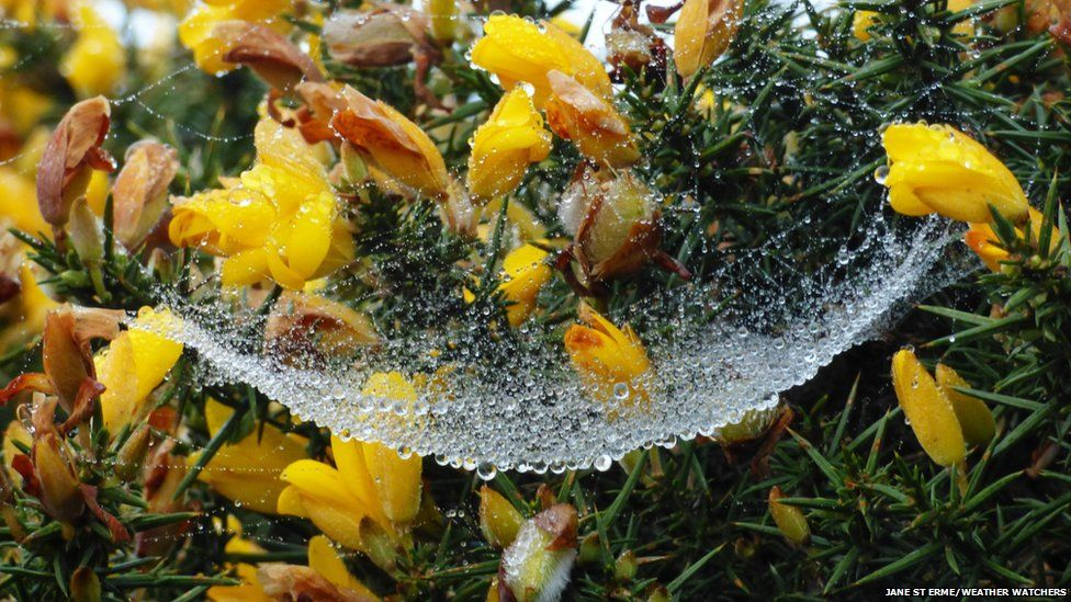 Dew droplets on a spider's web