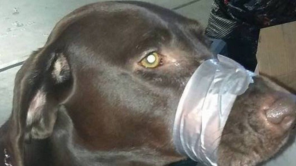 Dog with mouth taped shut