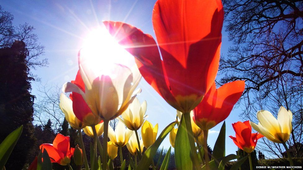 The sun shines through red flowers