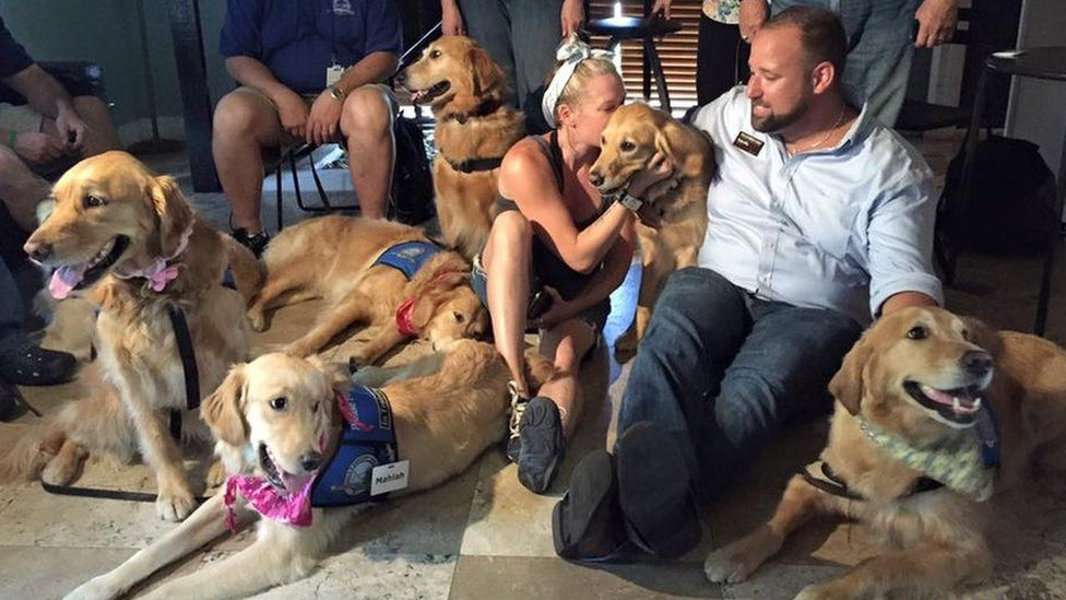 Comfort dogs lounge on the floor