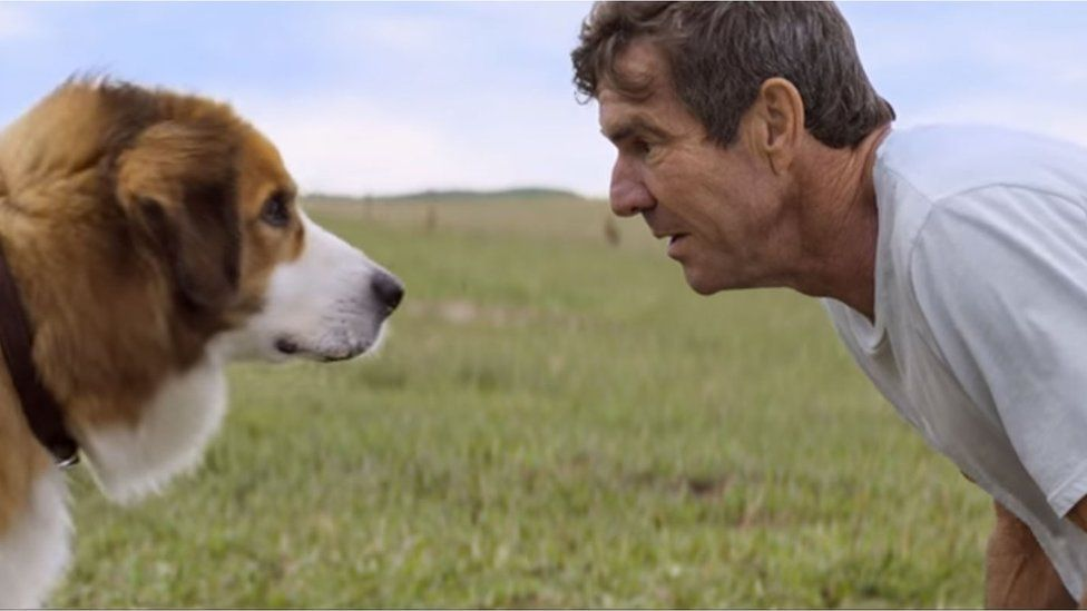 No Animals Harmed on A Dog's Purpose, American Humane Claims