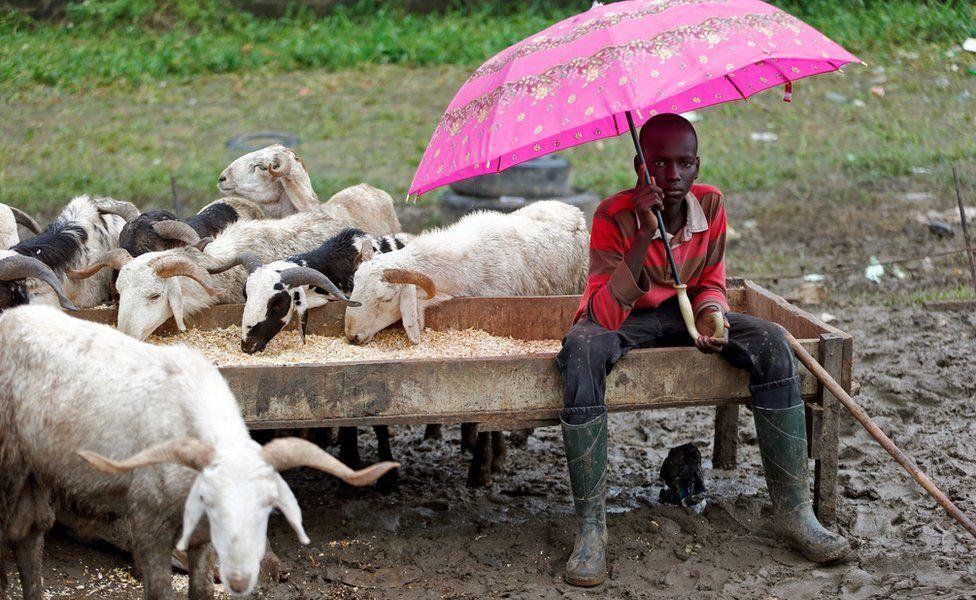 A livestock trader waits for customers at market in Lagos, Nigeria - Sunday 11 September 2016