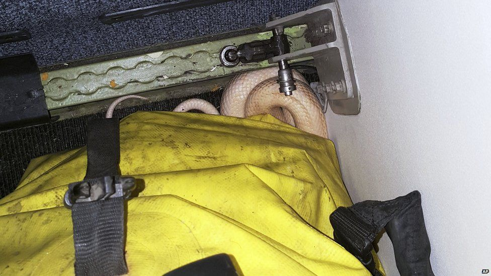 Passengers' shock as five-foot snake escapes on board plane in US