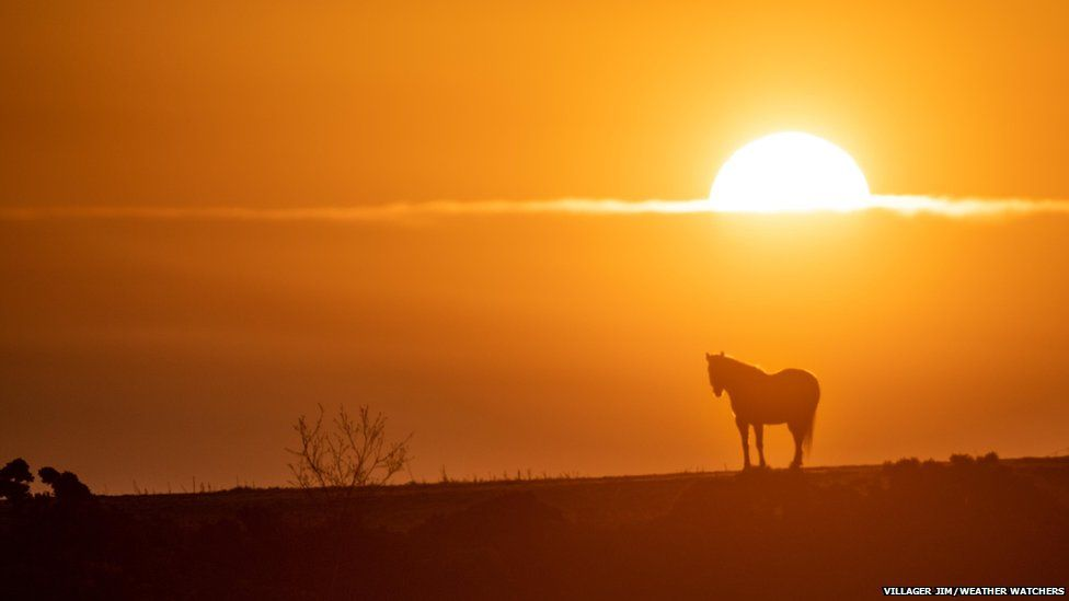 The sun rising over a field. A horse is in silhouette