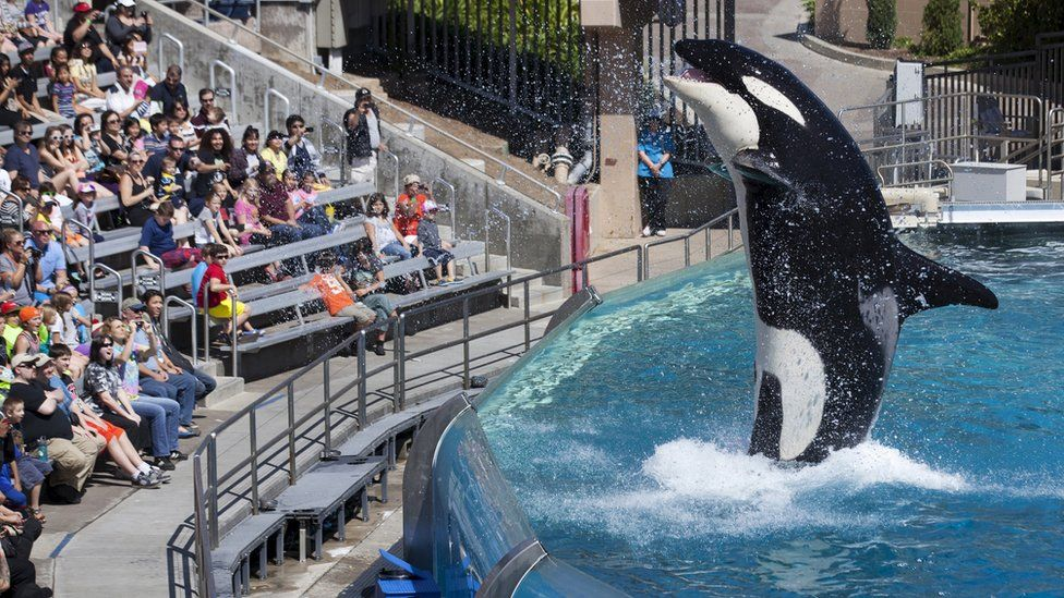 Killer whale show at the SeaWorld in San Diego