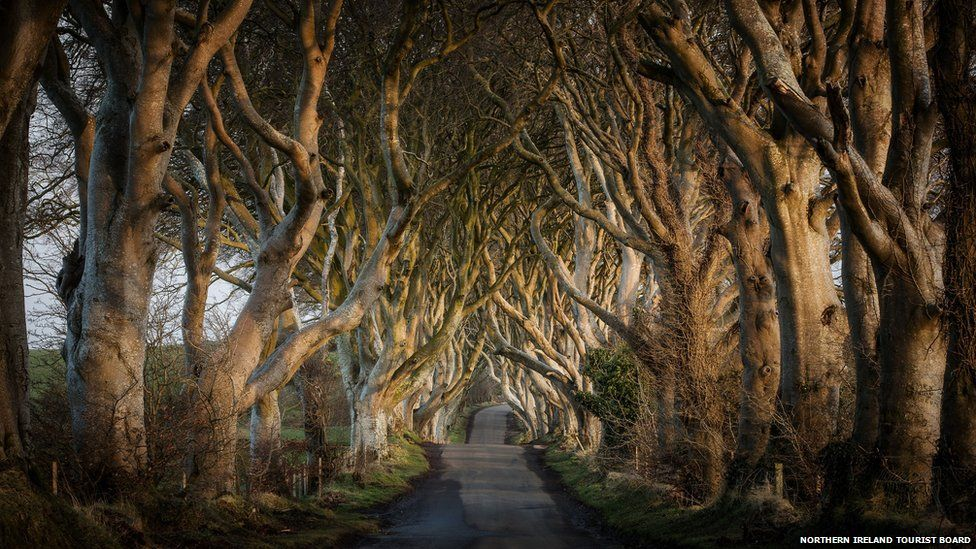 Bregagh Road in County Antrim, Northern Ireland made famous by Game of Thrones.
