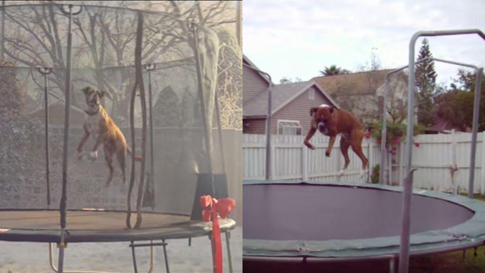 Comparison of both boxers