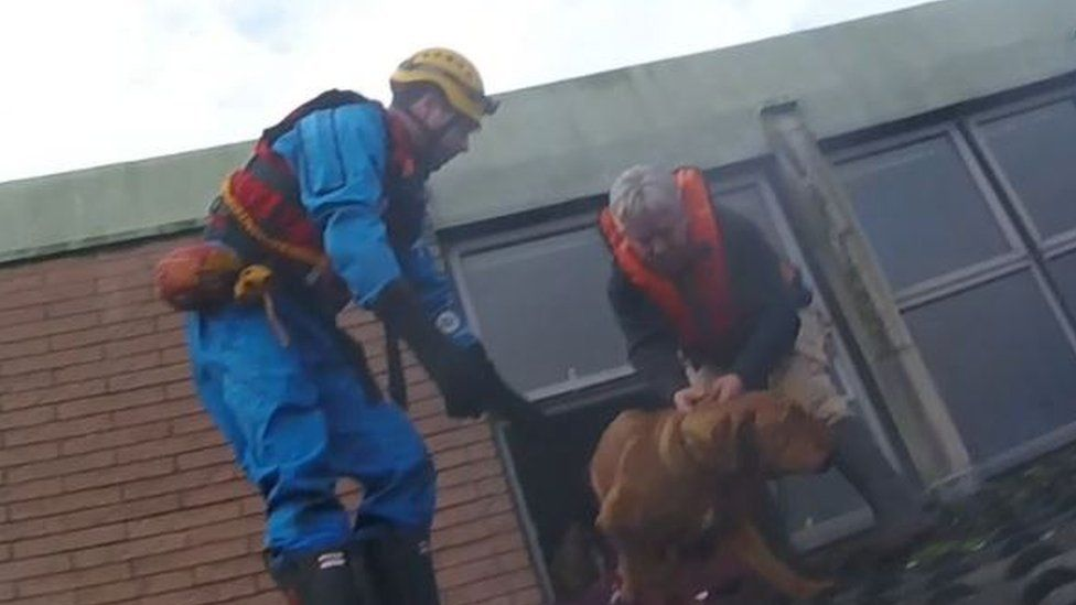 Dog being rescued from floods