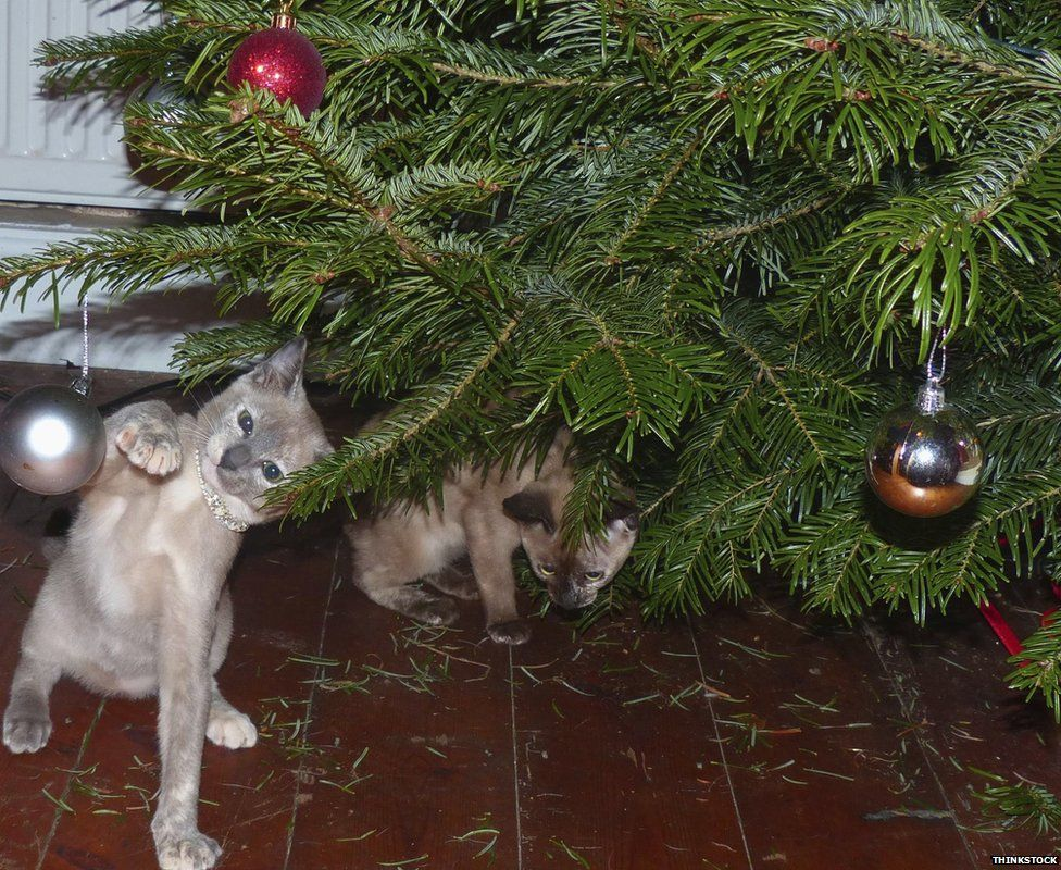 Cat playing with Christmas bauble
