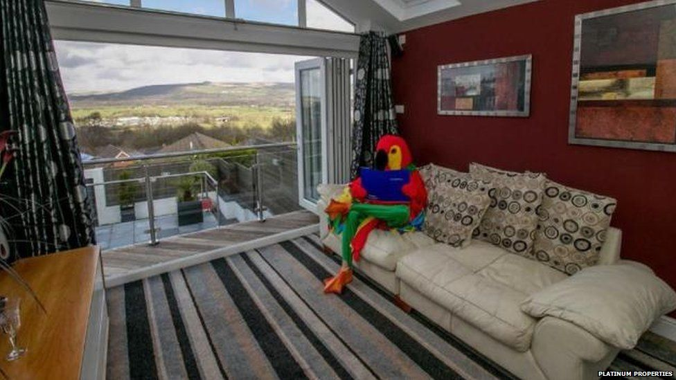 The parrot crashes on his sofa with a good book, after a hard day at work