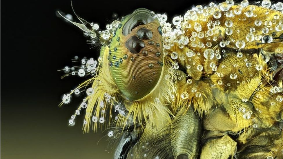 Wildlife photograph of an insect by Muhammad Roem