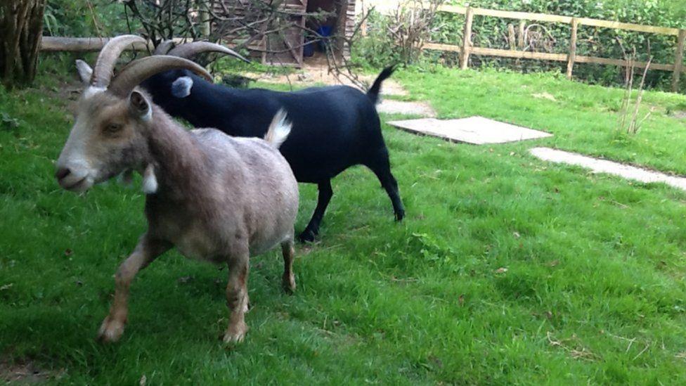 Jack (l) and Ebony having a run around