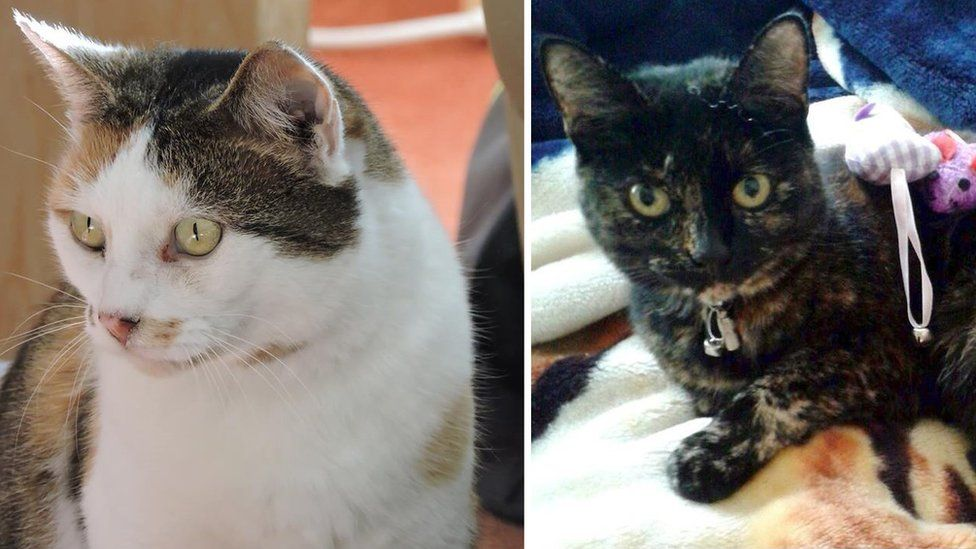 Missy (left) and Amber (right) are two of the cats killed
