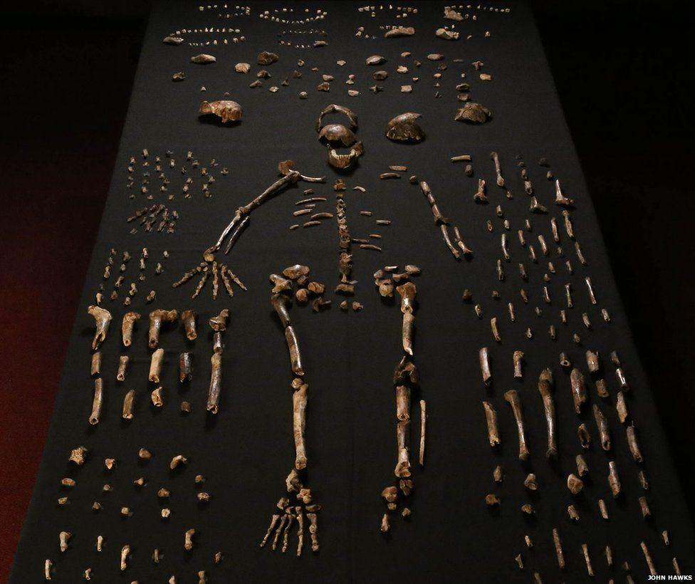 _85448683_01-homo-naledi-bone-table-vert