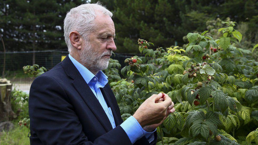 Jeremy Corbyn picking fruit