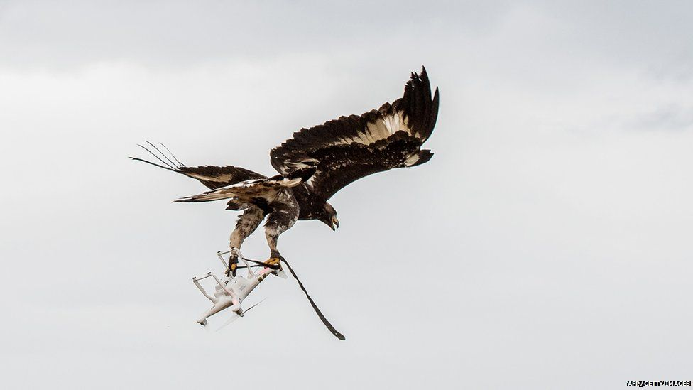An eagle catches a drone