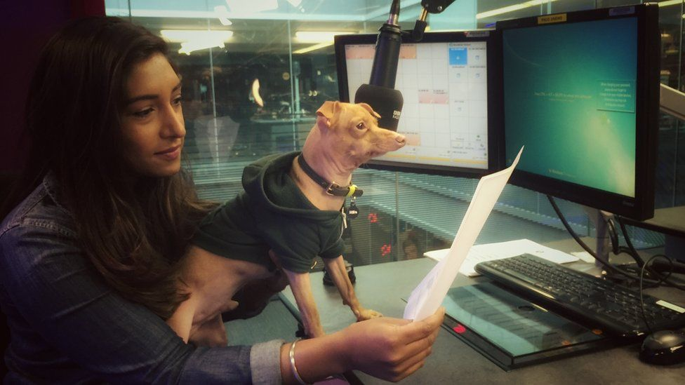 Tuna the dog with Newsbeat presenter Tina Daheley