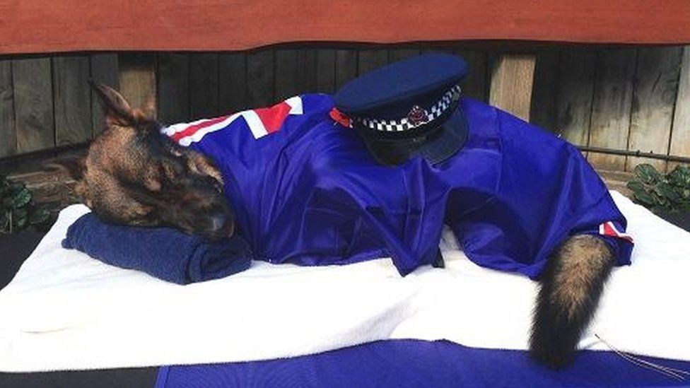 Police Dog Unit Uk