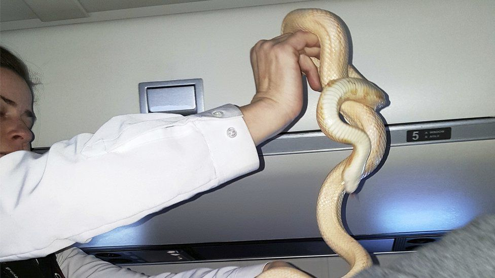 Passengers Find Five-foot Snake Sleeping on Plane