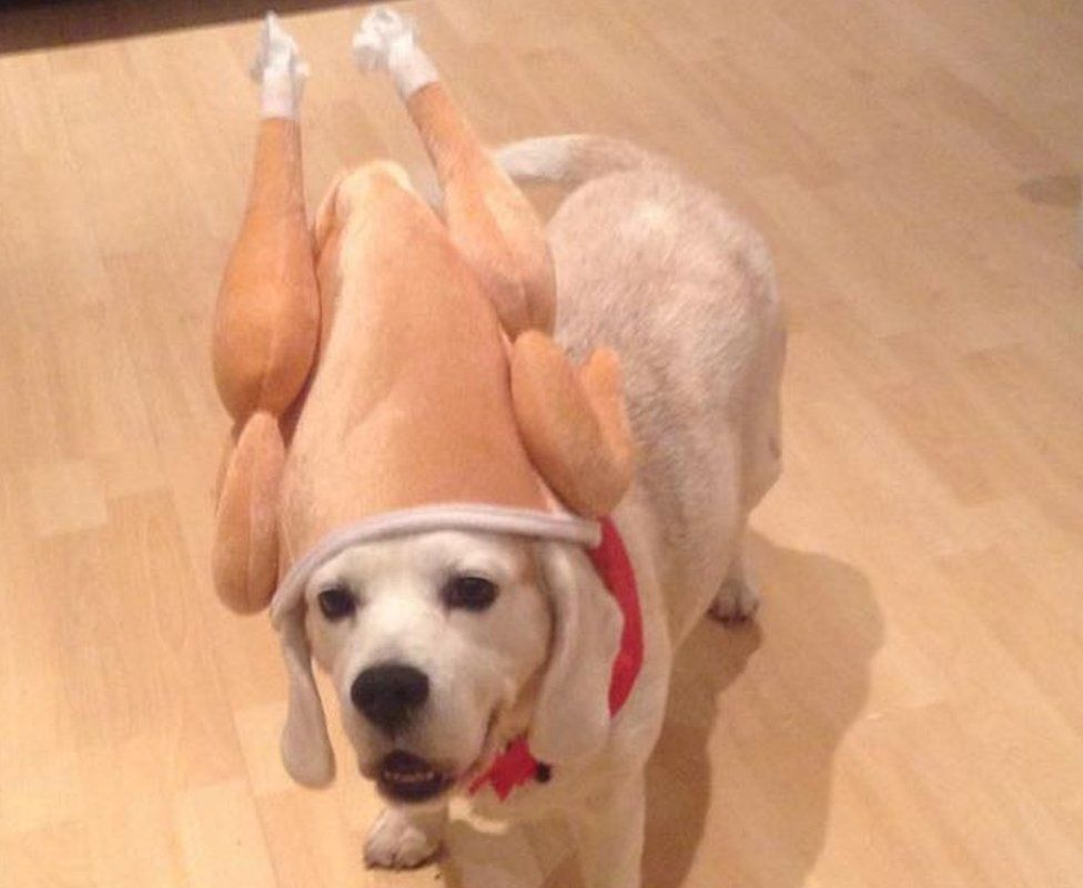 RSPCA says we shouldn\'t be dressing up our dogs in costumes this ...